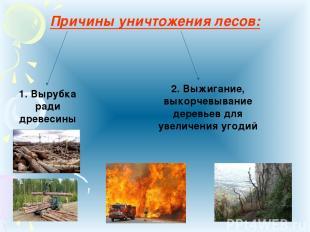 Причины уничтожения лесов: 1. Вырубка ради древесины 2. Выжигание, выкорчевывани