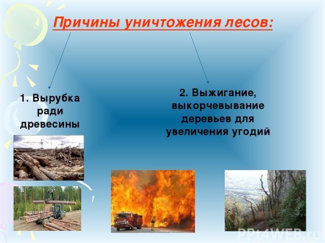 Причины уничтожения лесов: 1. Вырубка ради древесины 2. Выжигание, выкорчевывание деревьев для увеличения угодий