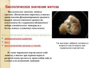 Биологическое значение митоза Биологическое значение митоза огромно. Постоянство