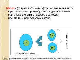 Митоз - (от греч. mitos – нить) способ деления клетки, в результате которого обр