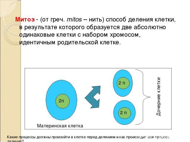 Митоз - (от греч. mitos – нить) способ деления клетки, в результате которого образуется две абсолютно одинаковые клетки с набором хромосом, идентичным родительской клетке. 2n 2 n 2 n Материнская клетка Дочерние клетки Какие процессы должны произойти…