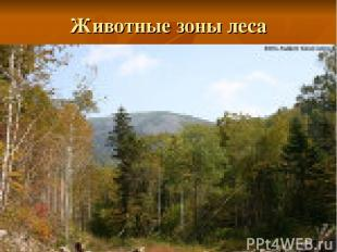 Животные зоны леса