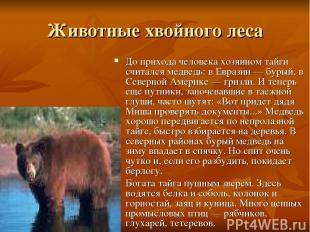 Животные хвойного леса До прихода человека хозяином тайги считался медведь: в Ев