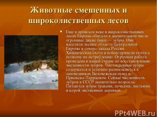 Животные смешенных и широколиственных лесов Еще в прошлом веке в широколиственны