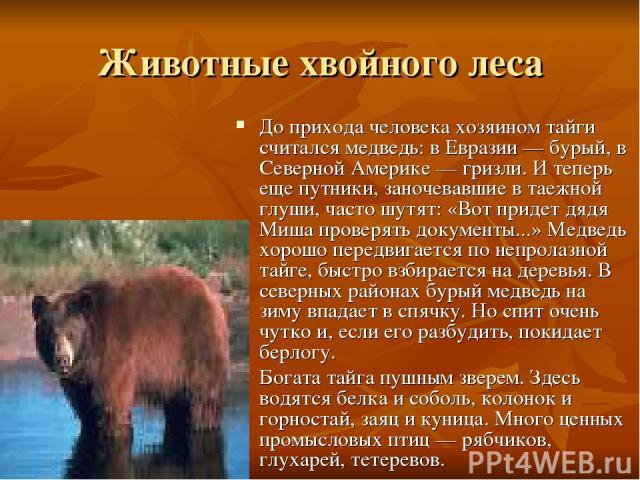 Животные хвойного леса До прихода человека хозяином тайги считался медведь: в Евразии — бурый, в Северной Америке — гризли. И теперь еще путники, заночевавшие в таежной глуши, часто шутят: «Вот придет дядя Миша проверять документы...» Медведь хорошо…