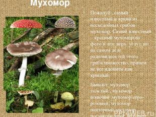 Мухомор Пожалуй , самый известный и яркий из несъедобных грибов – мухомор. Самый