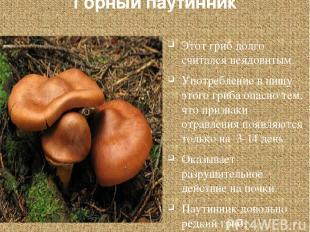 Горный паутинник Этот гриб долго считался неядовитым. Употребление в пищу этого
