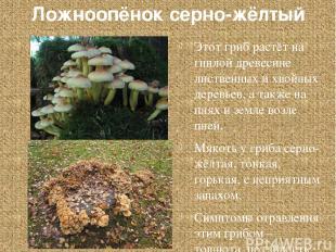 Ложноопёнок серно-жёлтый Этот гриб растёт на гнилой древесине лиственных и хвойн
