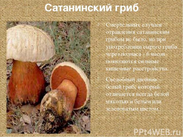 Сатанинский гриб Смертельных случаев отравления сатанинским грибом не было, но при употреблении сырого гриба через полчаса - 6 часов появляются сильные кишечные расстройства. Съедобный двойник – белый гриб, который отличается всегда белой мякотью и …