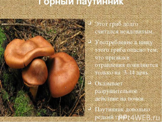 Горный паутинник Этот гриб долго считался неядовитым. Употребление в пищу этого гриба опасно тем, что признаки отравления появляются только на 3-14 день. Оказывает разрушительное действие на почки. Паутинник довольно редкий гриб. Похож на многие съе…