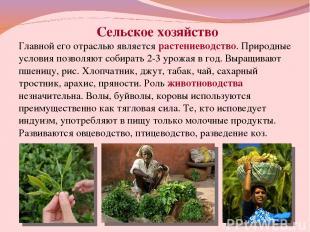 Сельское хозяйство Главной его отраслью является растениеводство. Природные усло