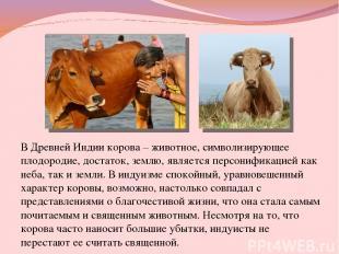 В Древней Индии корова – животное, символизирующее плодородие, достаток, землю,