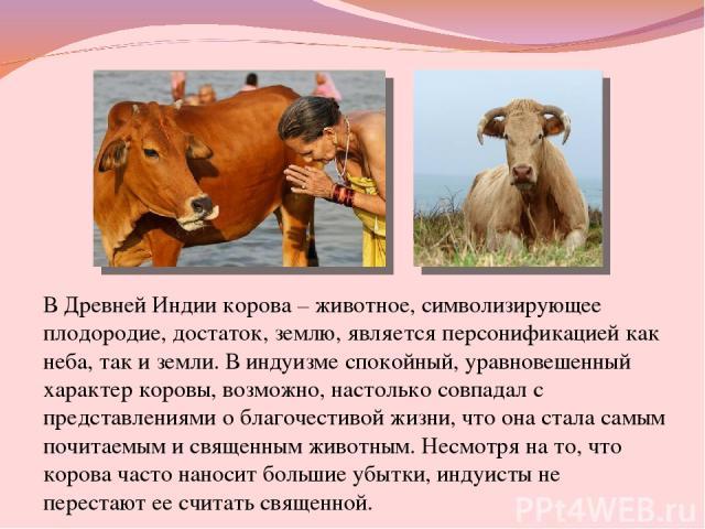 В Древней Индии корова – животное, символизирующее плодородие, достаток, землю, является персонификацией как неба, так и земли. В индуизме спокойный, уравновешенный характер коровы, возможно, настолько совпадал с представлениями о благочестивой жизн…