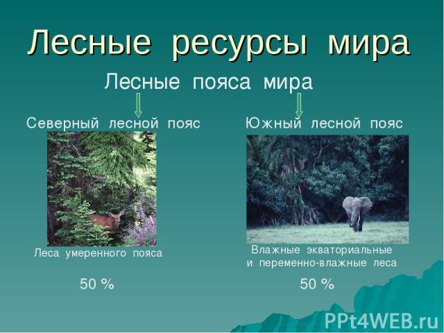 Лесные ресурсы мира Лесные пояса мира Северный лесной пояс Южный лесной пояс Леса умеренного пояса Влажные экваториальные и переменно-влажные леса 50 % 50 %