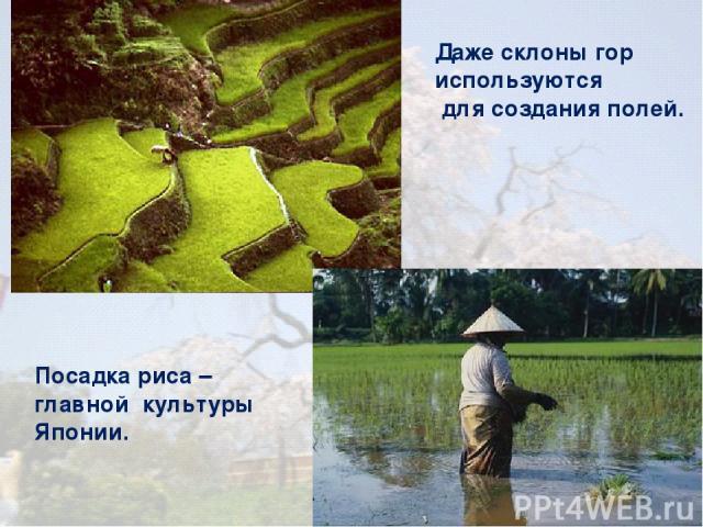 Даже склоны гор используются для создания полей. Посадка риса – главной культуры Японии.