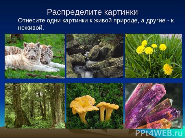 Распределите картинки Отнесите одни картинки к живой природе, а другие - к неживой.