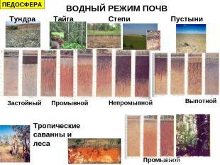 Тундра Тайга Степи Пустыни Тропические саванны и леса Промывной Застойный Непром