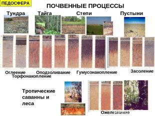 Тундра Тайга Степи Пустыни Тропические саванны и леса Оподзоливание Оглеение Гум