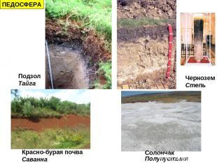 ПЕДОСФЕРА Подзол Тайга Чернозем Степь Красно-бурая почва Саванна Солончак Полупу