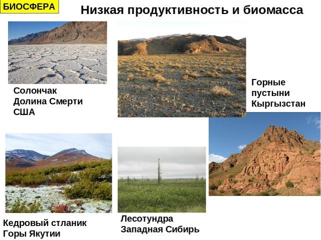 БИОСФЕРА Низкая продуктивность и биомасса Солончак Долина Смерти США Горные пустыни Кыргызстан Кедровый стланик Горы Якутии Лесотундра Западная Сибирь