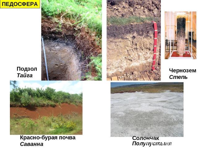 ПЕДОСФЕРА Подзол Тайга Чернозем Степь Красно-бурая почва Саванна Солончак Полупустыня