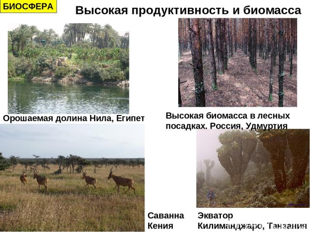 БИОСФЕРА Высокая продуктивность и биомасса Орошаемая долина Нила, Египет Саванна Кения Экватор Килиманджаро, Танзания Высокая биомасса в лесных посадках. Россия, Удмуртия