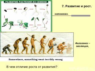 7. Развитие и рост. Филогенез – эволюция, онтогенез. В чем отличие роста от разв