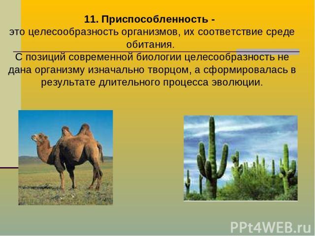 11. Приспособленность - это целесообразность организмов, их соответствие среде обитания. С позиций современной биологии целесообразность не дана организму изначально творцом, а сформировалась в результате длительного процесса эволюции.