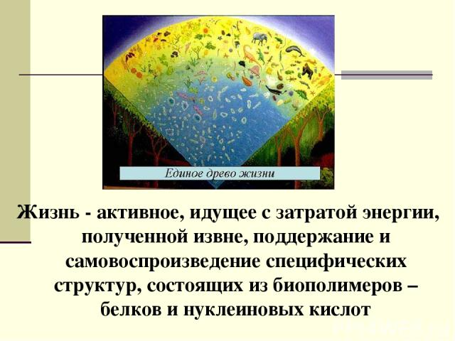 Жизнь - активное, идущее с затратой энергии, полученной извне, поддержание и самовоспроизведение специфических структур, состоящих из биополимеров – белков и нуклеиновых кислот