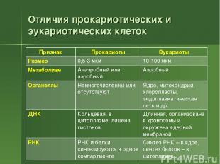 Отличия прокариотических и эукариотических клеток * Признак Прокариоты Эукариоты