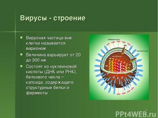 Вирусы - строение Вирусная частица вне клетки называется вирионом Величина варьи