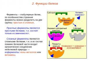 Ферменты – глобулярные белки, по особенностям строения ферменты можно разделить