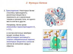 2. Транспортная. Некоторые белки способны присоединять различные вещества и пере