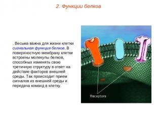 6. Весьма важна для жизни клетки сигнальная функция белков. В поверхностную мемб