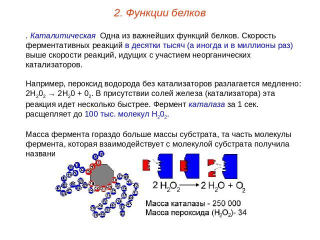 9. Каталитическая. Одна из важнейших функций белков. Скорость ферментативных реакций в десятки тысяч (а иногда и в миллионы раз) выше скорости реакций, идущих с участием неорганических катализаторов. Например, пероксид водорода без катализаторов раз…
