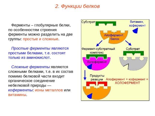Ферменты – глобулярные белки, по особенностям строения ферменты можно разделить на две группы: простые и сложные. Простые ферменты являются простыми белками, т.е. состоят только из аминокислот. Сложные ферменты являются сложными белками, т.е. в их с…