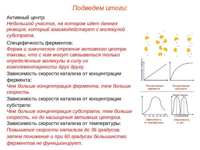 Активный центр: Небольшой участок, на котором идет данная реакция, который взаимодействует с молекулой субстрата.. Специфичность ферментов: Форма и химическое строение активного центра таковы, что с ним могут связываться только определенные молекулы…