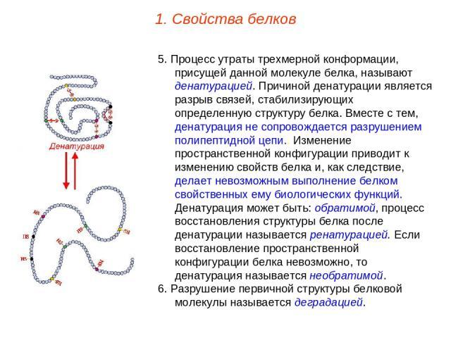 5. Процесс утраты трехмерной конформации, присущей данной молекуле белка, называют денатурацией. Причиной денатурации является разрыв связей, стабилизирующих определенную структуру белка. Вместе с тем, денатурация не сопровождается разрушением полип…