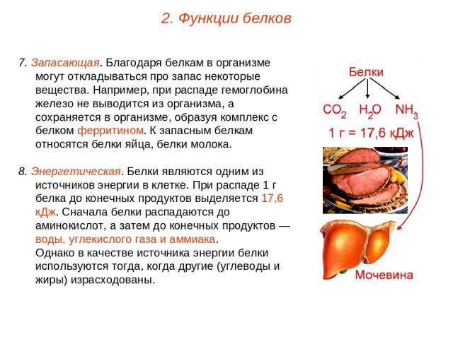 7. Запасающая. Благодаря белкам в организме могут откладываться про запас некоторые вещества. Например, при распаде гемоглобина железо не выводится из организма, а сохраняется в организме, образуя комплекс с белком ферритином. К запасным белкам отно…