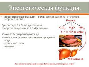 Энергетическаяфункция–белкислужат одним из источников энергии вклетке. При
