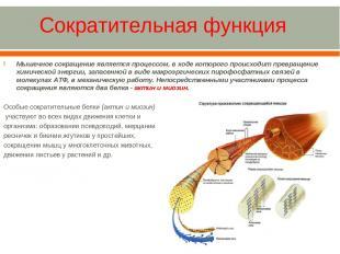 Мышечное сокращение является процессом, в ходе которого происходит превращение х