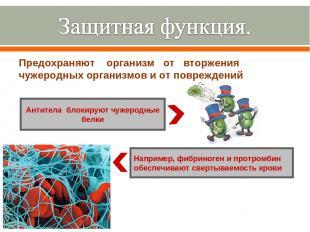 Предохраняют организм от вторжения чужеродных организмов и от повреждений Антите