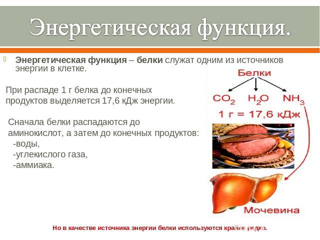 Энергетическаяфункция–белкислужат одним из источников энергии вклетке. При распаде 1 г белка до конечных продуктов выделяется 17,6 кДж энергии. Сначала белки распадаются до аминокислот, а затем до конечных продуктов: -воды, -углекислого газа, -…