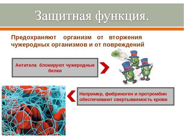 Предохраняют организм от вторжения чужеродных организмов и от повреждений Антитела блокируют чужеродные белки Например, фибриноген и протромбин обеспечивают свертываемость крови