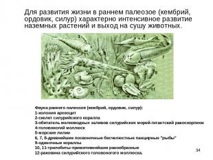 * Для развития жизни в раннем палеозое (кембрий, ордовик, силур) характерно