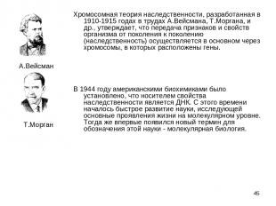 * Хромосомная теория наследственности, разработанная в 1910-1915 годах в трудах
