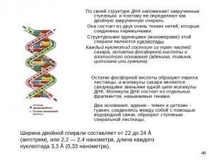 * По своей структуре ДНК напоминает закрученные ступеньки, и поэтому ее определя