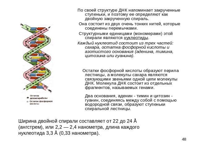 * По своей структуре ДНК напоминает закрученные ступеньки, и поэтому ее определяют как двойную закрученную спираль. Она состоит из двух очень тонких нитей, которые соединены перемычками. Структурными единицами (мономерами) этой спирали являются нукл…