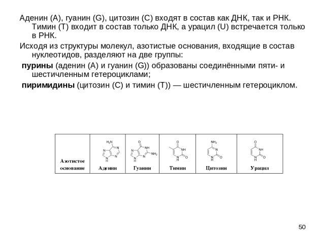 * Аденин (A), гуанин (G), цитозин (C) входят в состав как ДНК, так и РНК. Тимин (T) входит в состав только ДНК, а урацил (U) встречается только в РНК. Исходя из структуры молекул, азотистые основания, входящие в состав нуклеотидов, разделяют на две …