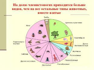 На долю членистоногих приходится больше видов, чем на все остальные типы животны